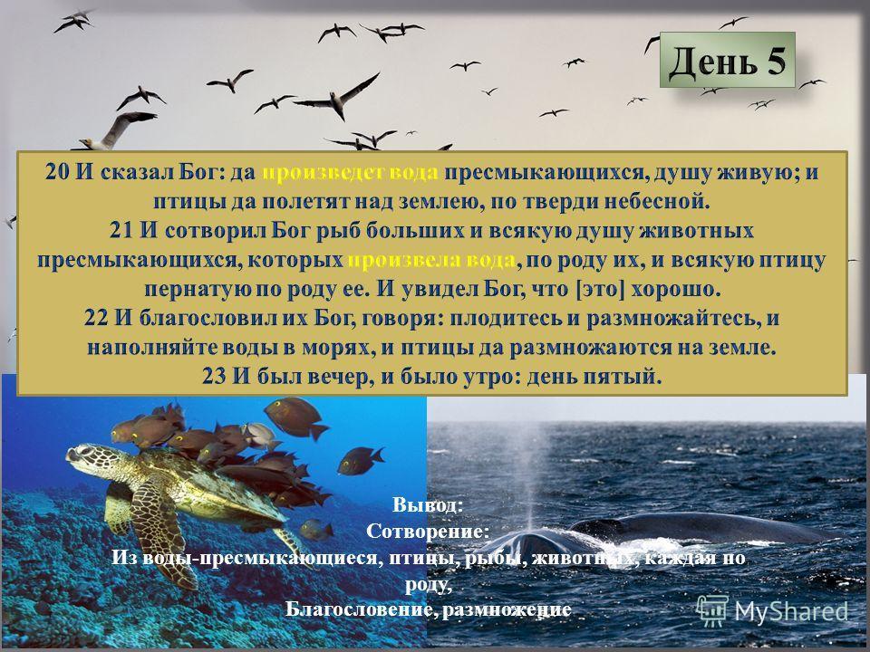 Вывод: Сотворение: Из воды-пресмыкающиеся, птицы, рыбы, животных, каждая по роду, Благословение, размножение