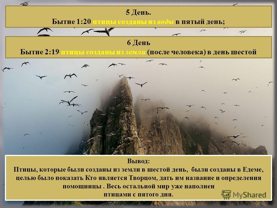 5 День. Бытие 1:20 птицы созданы из воды в пятый день; 6 День Бытие 2:19 птицы созданы из земли (после человека) в день шестой Вывод: Птицы, которые были созданы из земли в шестой день, были созданы в Едеме, целью было показать Кто является Творцом,