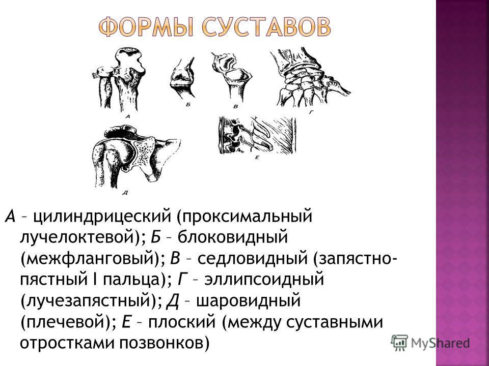 А – цилиндрицеский (проксимальный лучелоктевой); Б – блоковидный (межфланговый); В – седловидный (запястно- пястный I пальца); Г – эллипсоидный (лучезапястный); Д – шаровидный (плечевой); Е – плоский (между суставными отростками позвонков)