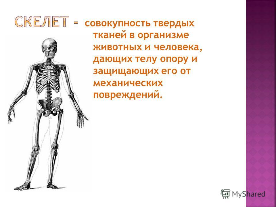 совокупность твердых тканей в организме животных и человека, дающих телу опору и защищающих его от механических повреждений.