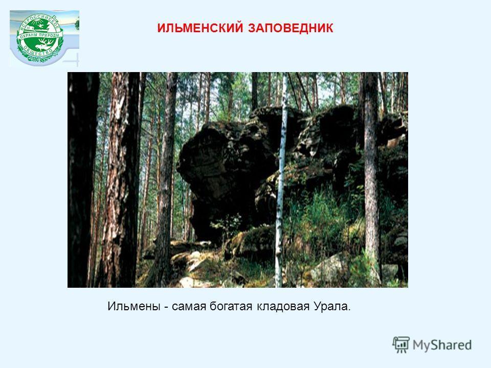 Ильмены - самая богатая кладовая Урала. ИЛЬМЕНСКИЙ ЗАПОВЕДНИК