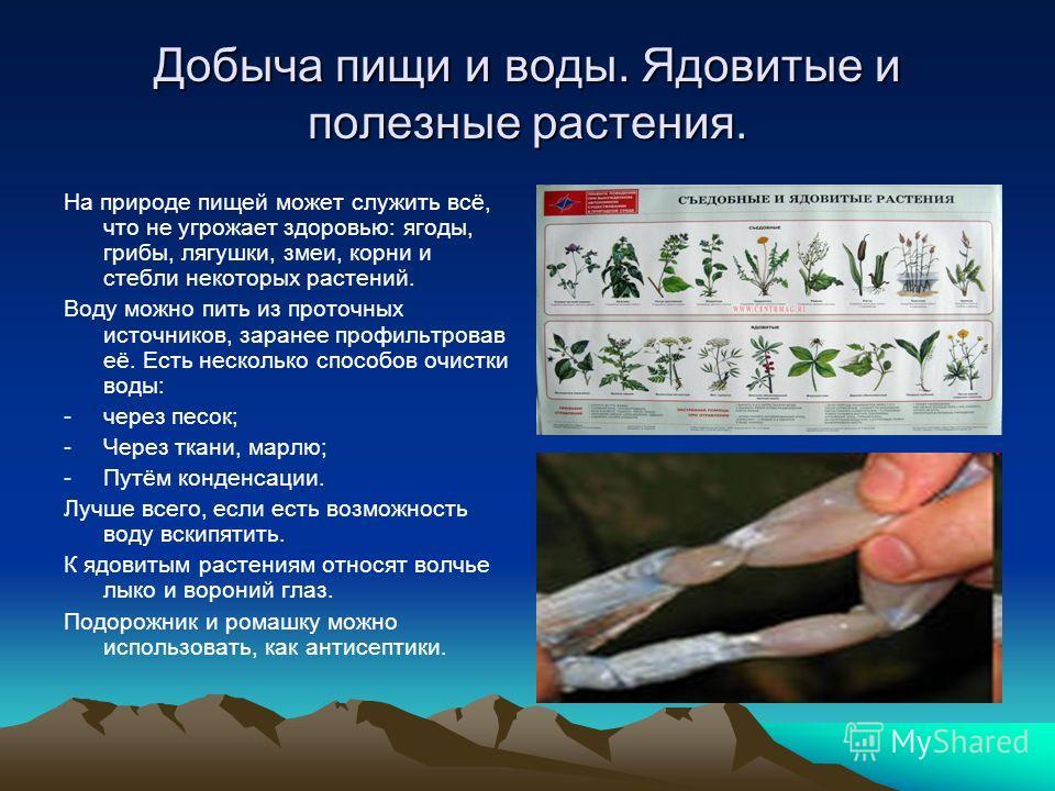 Добыча пищи и воды. Ядовитые и полезные растения. На природе пищей может служить всё, что не угрожает здоровью: ягоды, грибы, лягушки, змеи, корни и стебли некоторых растений. Воду можно пить из проточных источников, заранее профильтровав её. Есть не