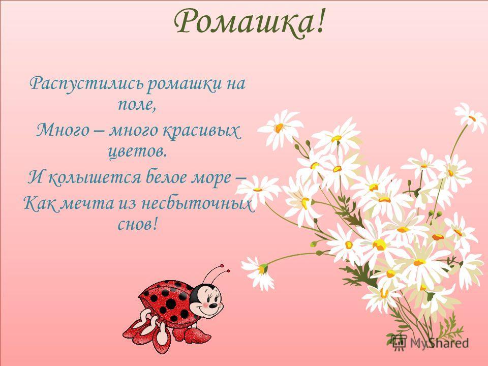 Ромашка! Распустились ромашки на поле, Много – много красивых цветов. И колышется белое море – Как мечта из несбыточных снов!
