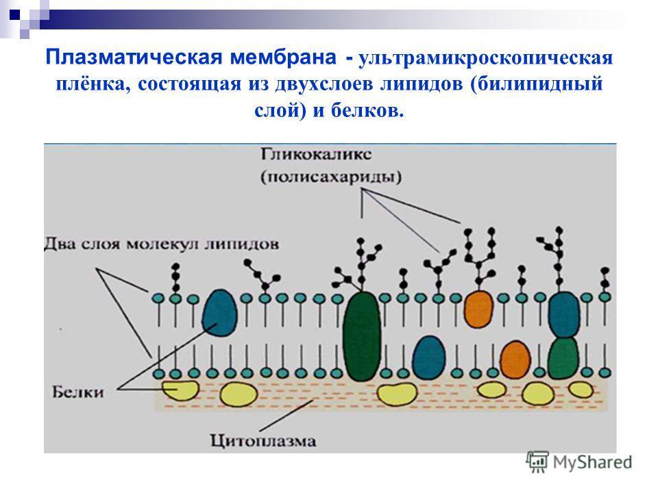 Плазматическая мембрана - ультрамикроскопическая плёнка, состоящая из двухслоев липидов (билипидный слой) и белков.
