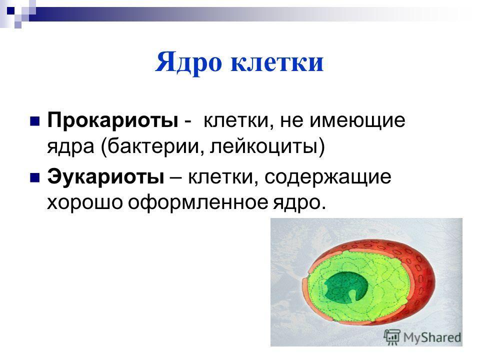 Ядро клетки Прокариоты - клетки, не имеющие ядра (бактерии, лейкоциты) Эукариоты – клетки, содержащие хорошо оформленное ядро.