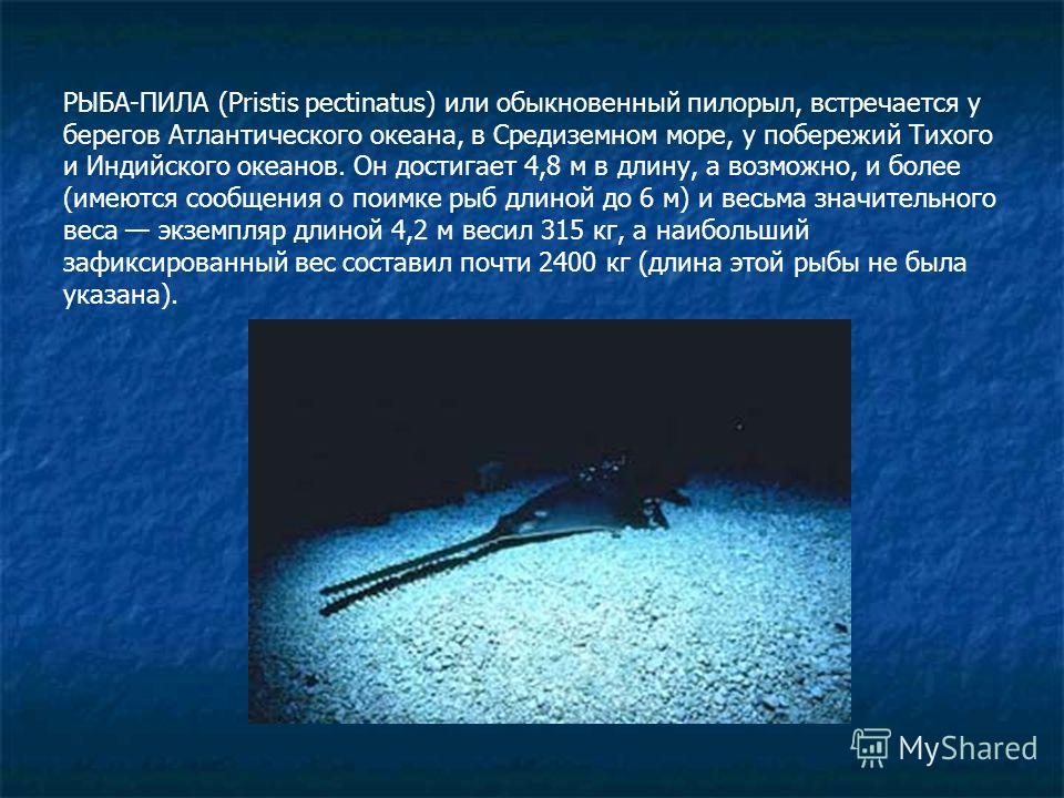 РЫБА-ПИЛА (Pristis pectinatus) или обыкновенный пилорыл, встречается у берегов Атлантического океана, в Средиземном море, у побережий Тихого и Индийского океанов. Он достигает 4,8 м в длину, а возможно, и более (имеются сообщения о поимке рыб длиной