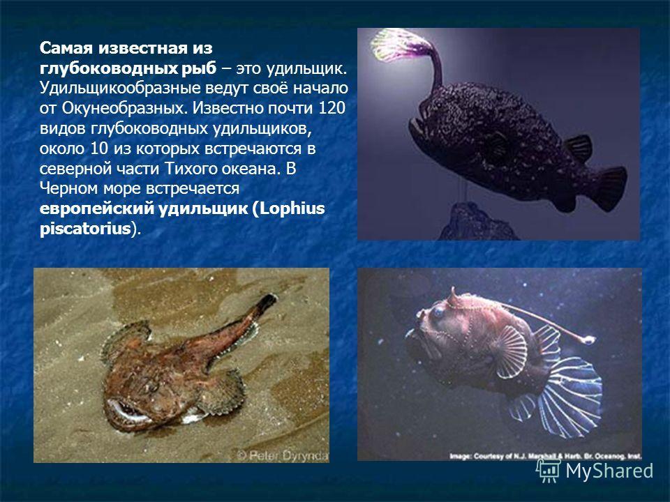Самая известная из глубоководных рыб – это удильщик. Удильщикообразные ведут своё начало от Окунеобразных. Известно почти 120 видов глубоководных удильщиков, около 10 из которых встречаются в северной части Тихого океана. В Черном море встречается ев