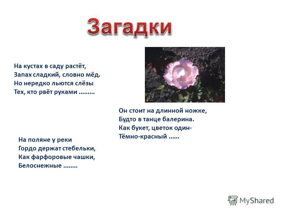 * Пион * Хризантема * Астра * Лилия-саранка