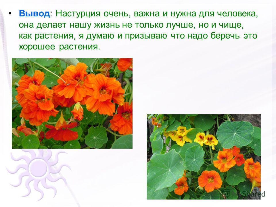 Вывод: Настурция очень, важна и нужна для человека, она делает нашу жизнь не только лучше, но и чище, как растения, я думаю и призываю что надо беречь это хорошее растения.