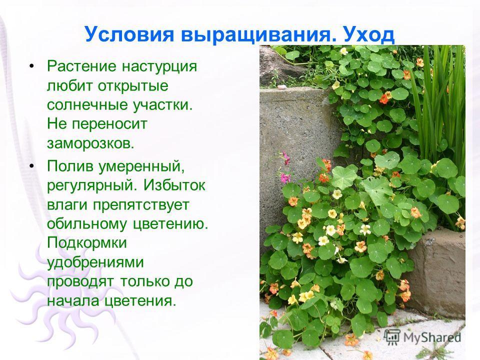 Условия выращивания. Уход Растение настурция любит открытые солнечные участки. Не переносит заморозков. Полив умеренный, регулярный. Избыток влаги препятствует обильному цветению. Подкормки удобрениями проводят только до начала цветения.