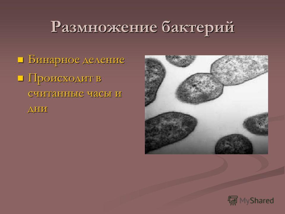 Размножение бактерий Бинарное деление Бинарное деление Происходит в считанные часы и дни Происходит в считанные часы и дни