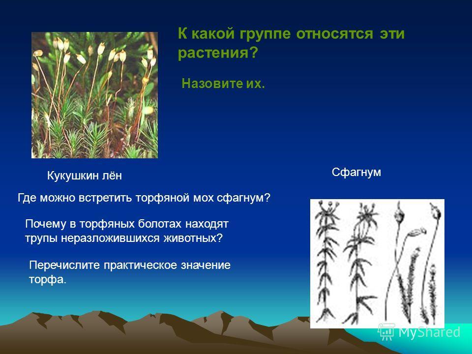 Кукушкин лён Сфагнум К какой группе относятся эти растения? Назовите их. Где можно встретить торфяной мох сфагнум? Почему в торфяных болотах находят трупы неразложившихся животных? Перечислите практическое значение торфа.