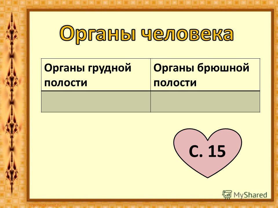 Органы грудной полости Органы брюшной полости С. 15