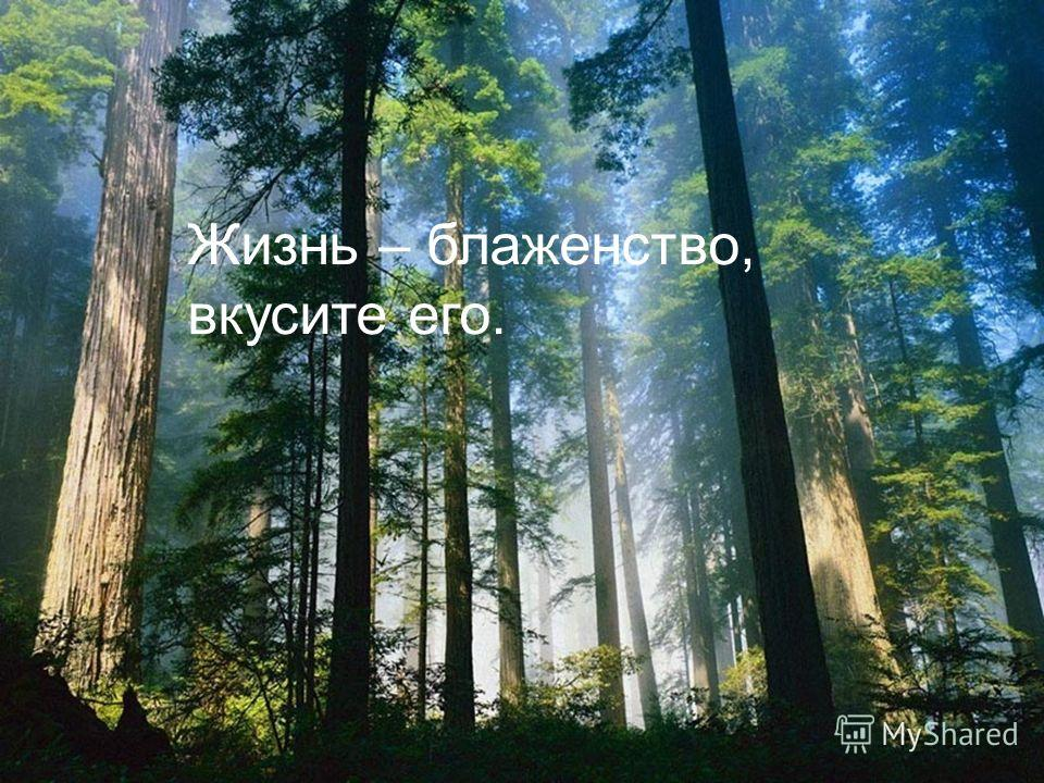 Жизнь – блаженство, вкусите его.