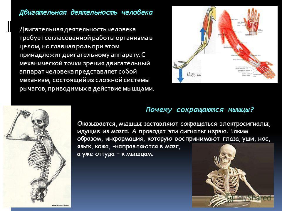 Двигательная деятельность человека Двигательная деятельность человека требует согласованной работы организма в целом, но главная роль при этом принадлежит двигательному аппарату. С механической точки зрения двигательный аппарат человека представляет