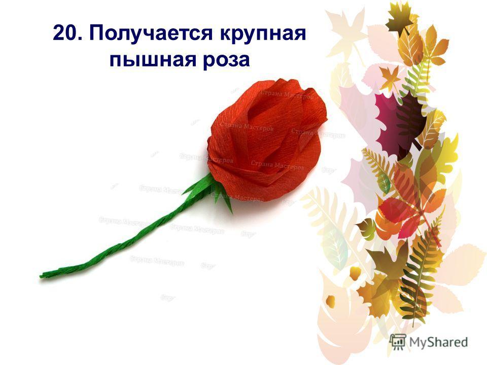 20. Получается крупная пышная роза