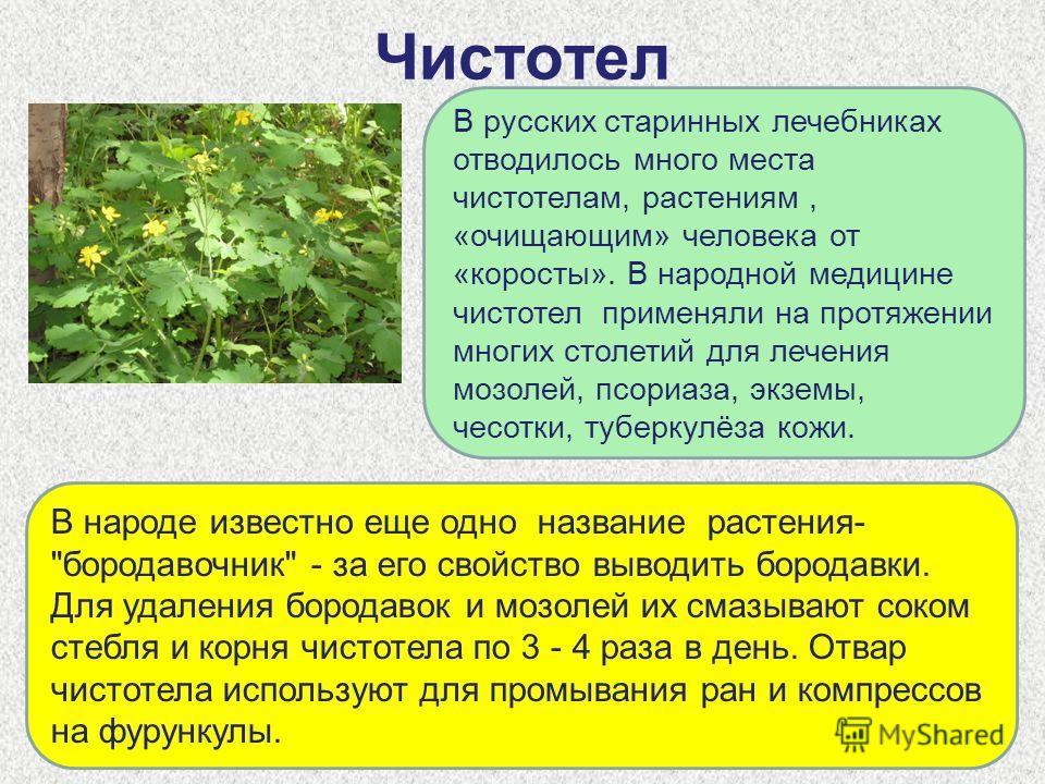Чистотел В русских старинных лечебниках отводилось много места чистотелам, растениям, «очищающим» человека от «коросты». В народной медицине чистотел применяли на протяжении многих столетий для лечения мозолей, псориаза, экземы, чесотки, туберкулёза