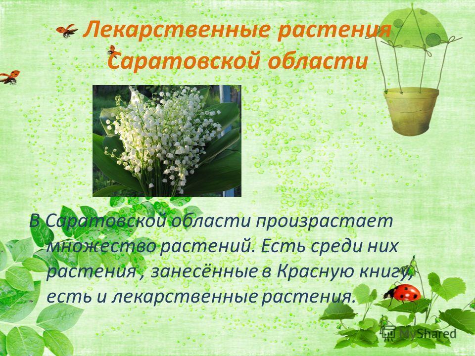 Лекарственные растения Саратовской области В Саратовской области произрастает множество растений. Есть среди них растения, занесённые в Красную книгу, есть и лекарственные растения.