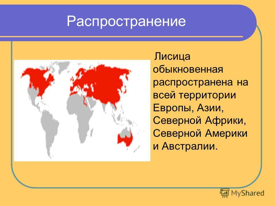 Распространение Лисица обыкновенная распространена на всей территории Европы, Азии, Северной Африки, Северной Америки и Австралии.