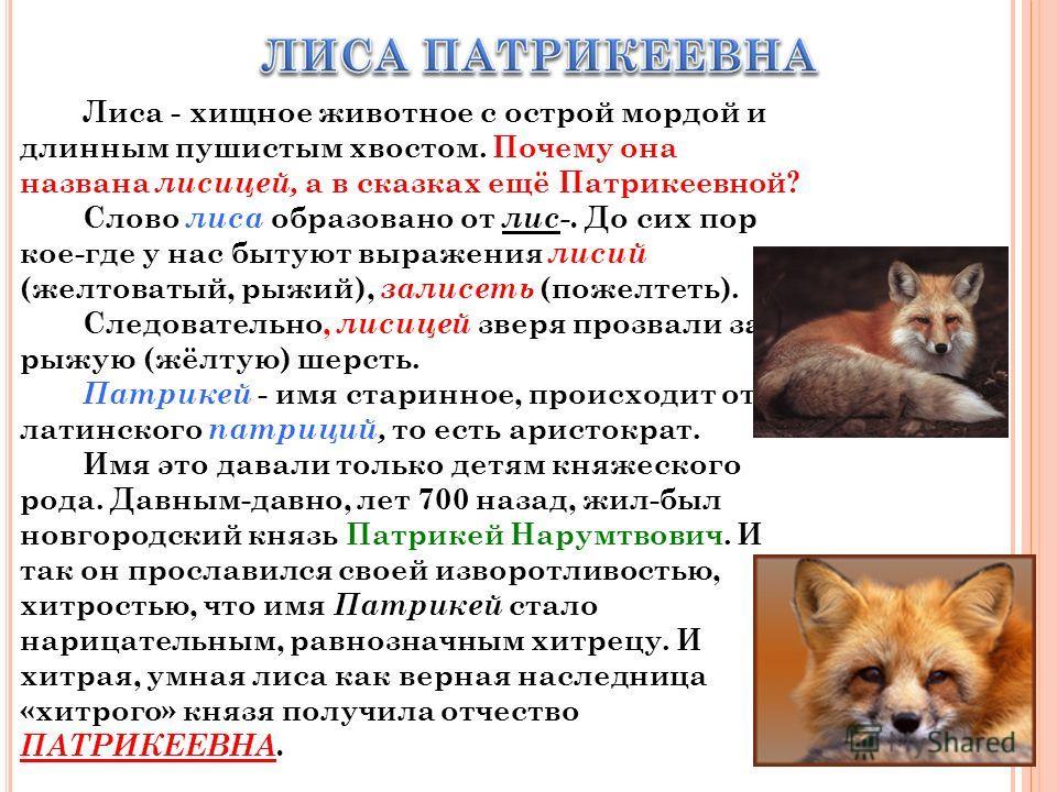 Лиса - хищное животное с острой мордой и длинным пушистым хвостом. Почему она названа лисицей, а в сказках ещё Патрикеевной? Слово лиса образовано от лис-. До сих пор кое-где у нас бытуют выражения лисий (желтоватый, рыжий), залисеть (пожелтеть). Сле