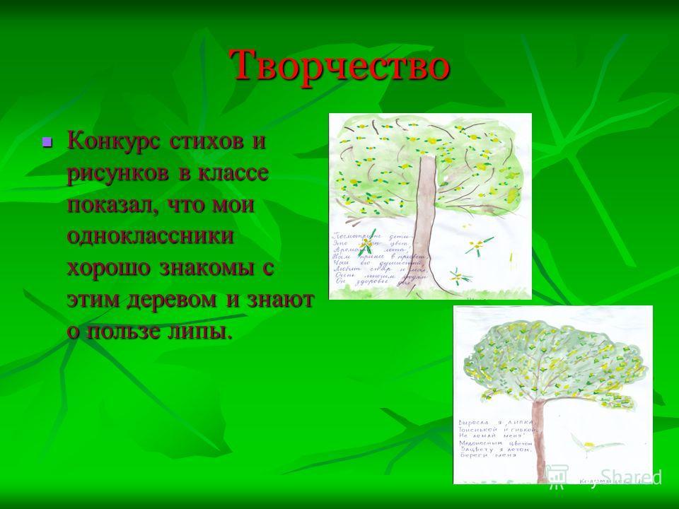 Творчество Конкурс стихов и рисунков в классе показал, что мои одноклассники хорошо знакомы с этим деревом и знают о пользе липы. Конкурс стихов и рисунков в классе показал, что мои одноклассники хорошо знакомы с этим деревом и знают о пользе липы.