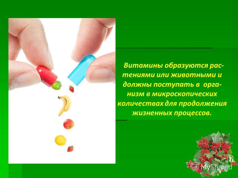 Витамины образуются рас- тениями или животными и должны поступать в орга- низм в микроскопических количествах для продолжения жизненных процессов.