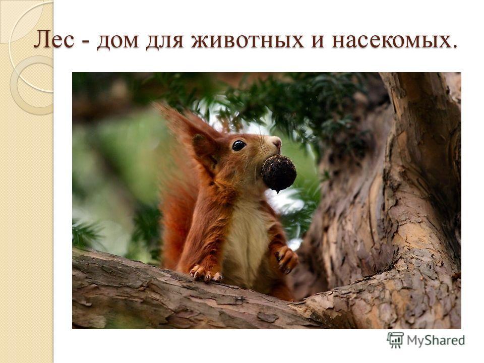 Лес - дом для животных и насекомых.