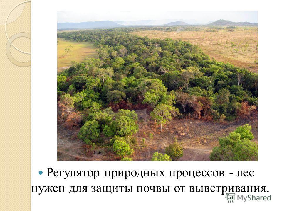 Регулятор природных процессов - лес нужен для защиты почвы от выветривания.