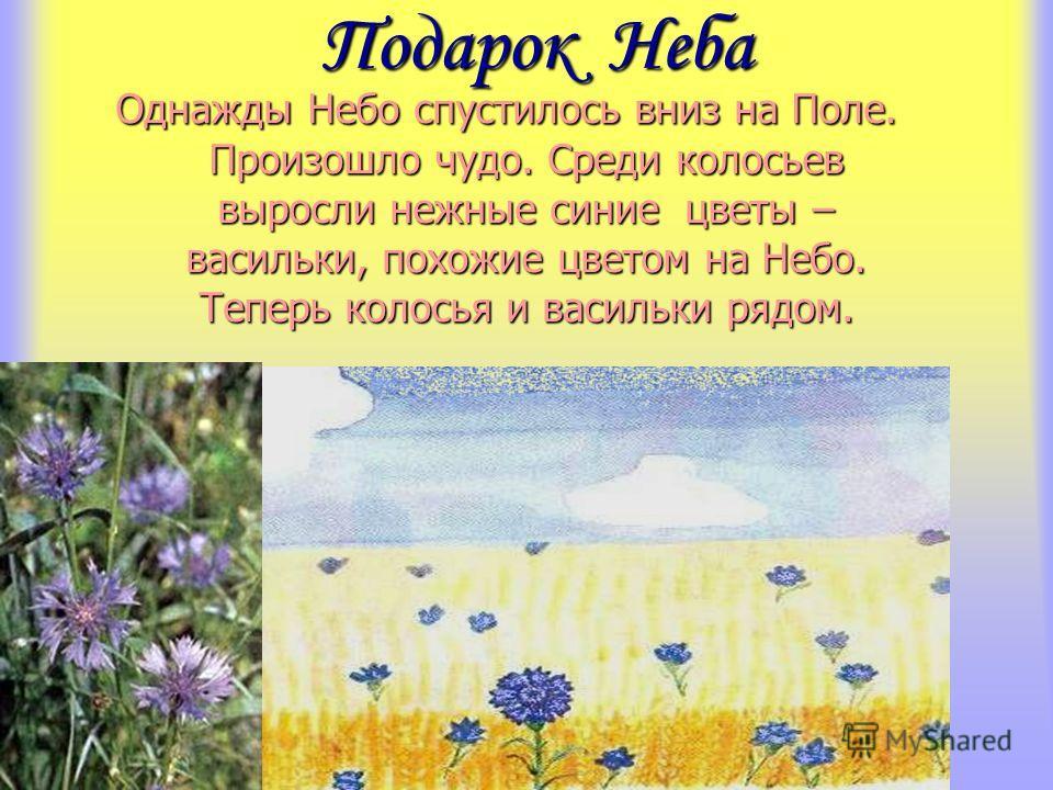 Подарок Неба Однажды Небо спустилось вниз на Поле. Произошло чудо. Среди колосьев выросли нежные синие цветы – васильки, похожие цветом на Небо. Теперь колосья и васильки рядом.