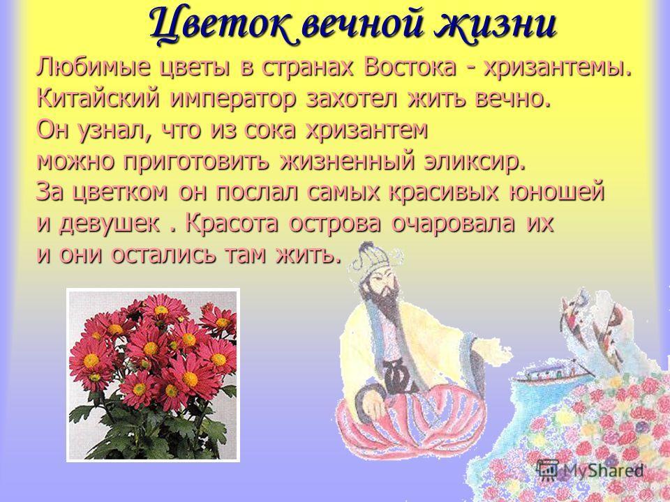 Цветок вечной жизни Цветок вечной жизни Любимые цветы в странах Востока - хризантемы. Китайский император захотел жить вечно. Он узнал, что из сока хризантем можно приготовить жизненный эликсир. За цветком он послал самых красивых юношей и девушек. К
