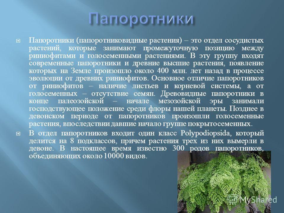 Папоротники ( папоротниковидные растения ) – это отдел сосудистых растений, которые занимают промежуточную позицию между риниофитами и голосеменными растениями. В эту группу входят современные папоротники и древние высшие растения, появление которых