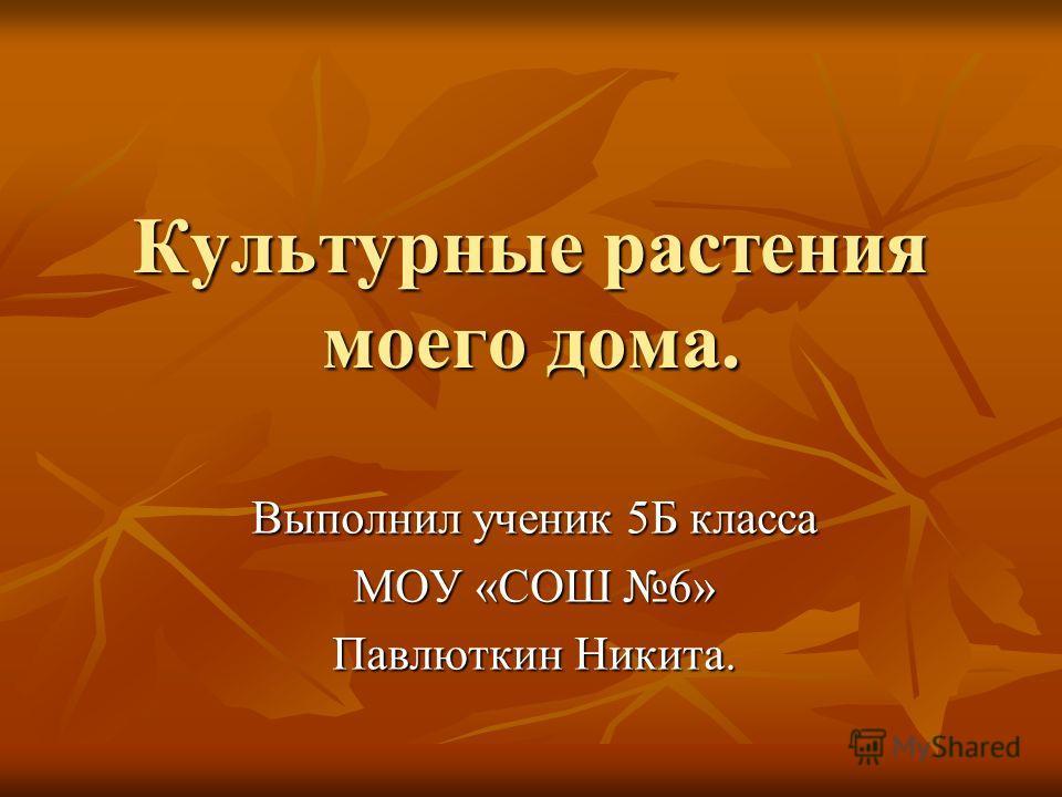 Культурные растения моего дома. Выполнил ученик 5Б класса МОУ «СОШ 6» Павлюткин Никита.