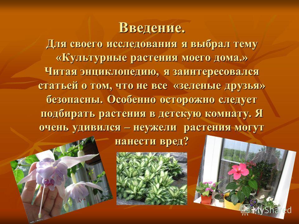 Введение. Для своего исследования я выбрал тему «Культурные растения моего дома.» Читая энциклопедию, я заинтересовался статьей о том, что не все «зеленые друзья» безопасны. Особенно осторожно следует подбирать растения в детскую комнату. Я очень уди