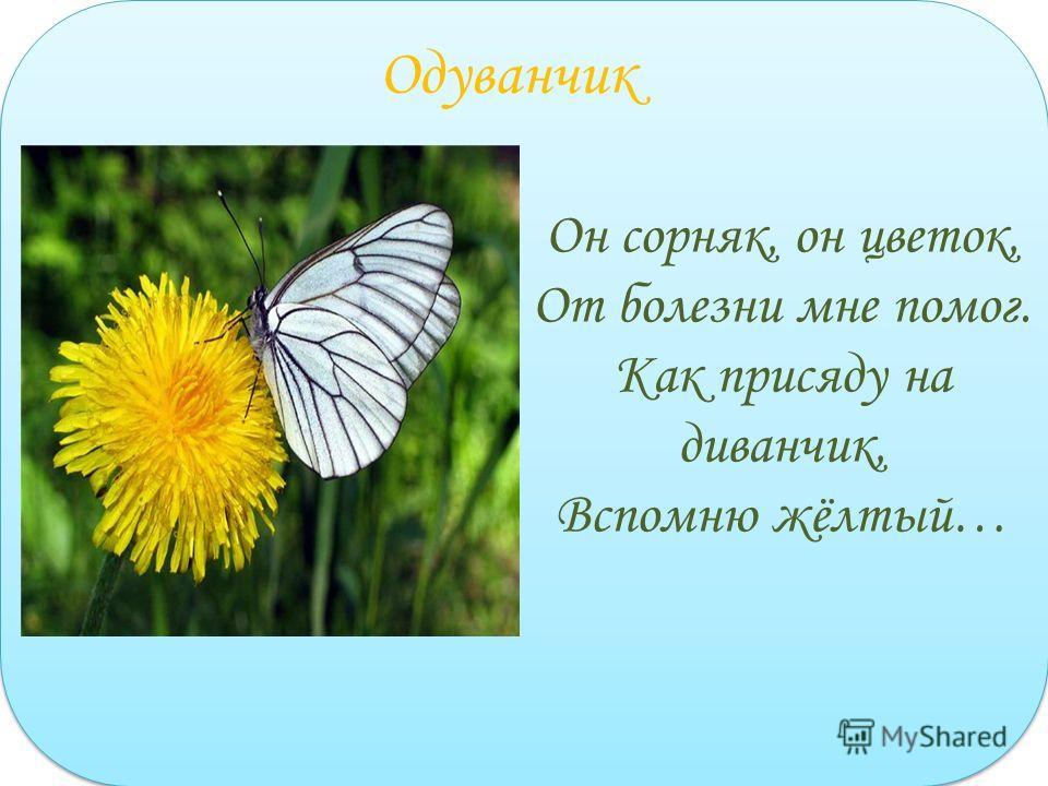 Он сорняк, он цветок, От болезни мне помог. Как присяду на диванчик, Вспомню жёлтый… Одуванчик