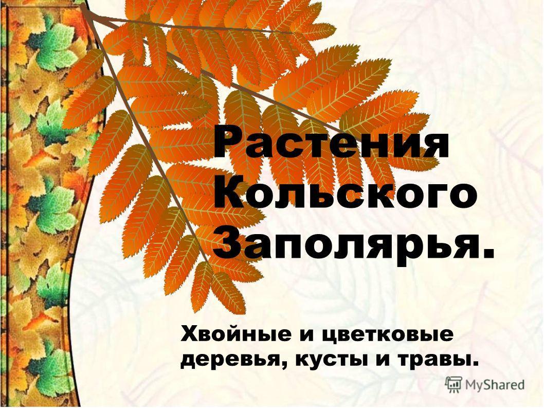Растения Кольского Заполярья. Хвойные и цветковые деревья, кусты и травы.