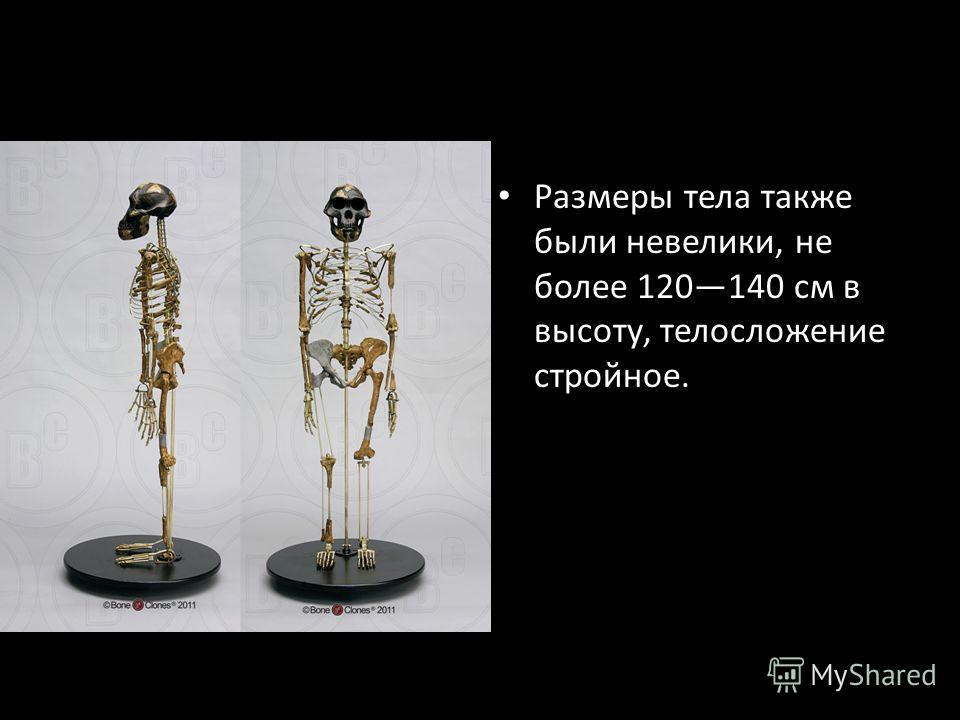 Размеры тела также были невелики, не более 120140 см в высоту, телосложение стройное.