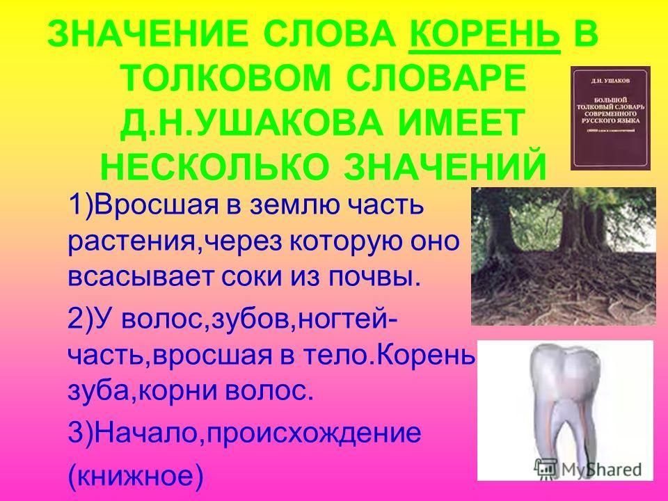 ЗНАЧЕНИЕ СЛОВА КОРЕНЬ В ТОЛКОВОМ СЛОВАРЕ Д.Н.УШАКОВА ИМЕЕТ НЕСКОЛЬКО ЗНАЧЕНИЙ 1)Вросшая в землю часть растения,через которую оно всасывает соки из почвы. 2)У волос,зубов,ногтей- часть,вросшая в тело.Корень зуба,корни волос. 3)Начало,происхождение (кн