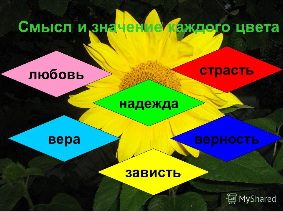 Смысл и значение каждого цвета любовь страсть надежда вераверность зависть
