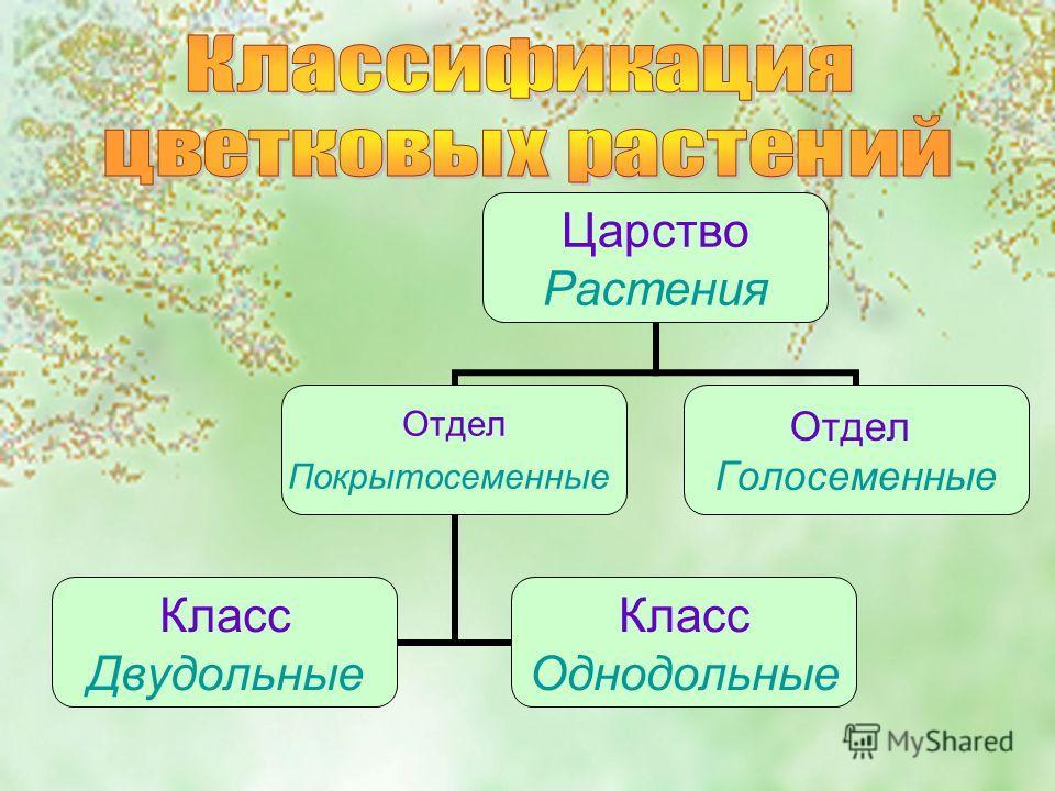 Царство Растения Отдел Покрытосеменные Класс Двудольные Класс Однодольные Отдел Голосеменные