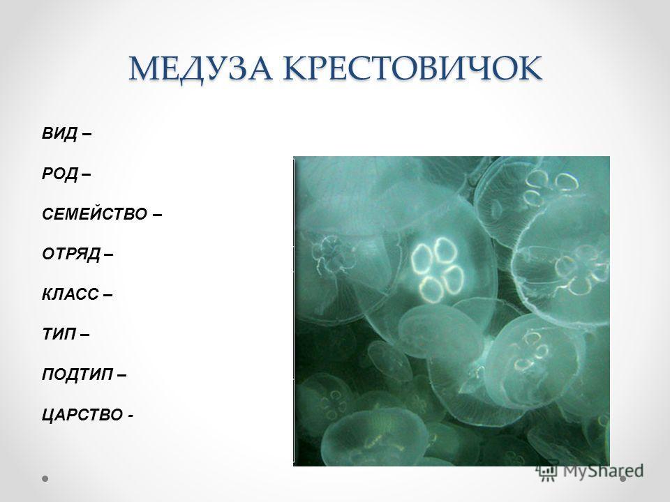 МЕДУЗА КРЕСТОВИЧОК ВИД – РОД – СЕМЕЙСТВО – ОТРЯД – КЛАСС – ТИП – ПОДТИП – ЦАРСТВО -