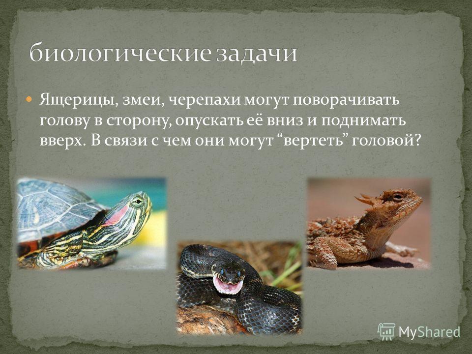 Ящерицы, змеи, черепахи могут поворачивать голову в сторону, опускать её вниз и поднимать вверх. В связи с чем они могут вертеть головой?
