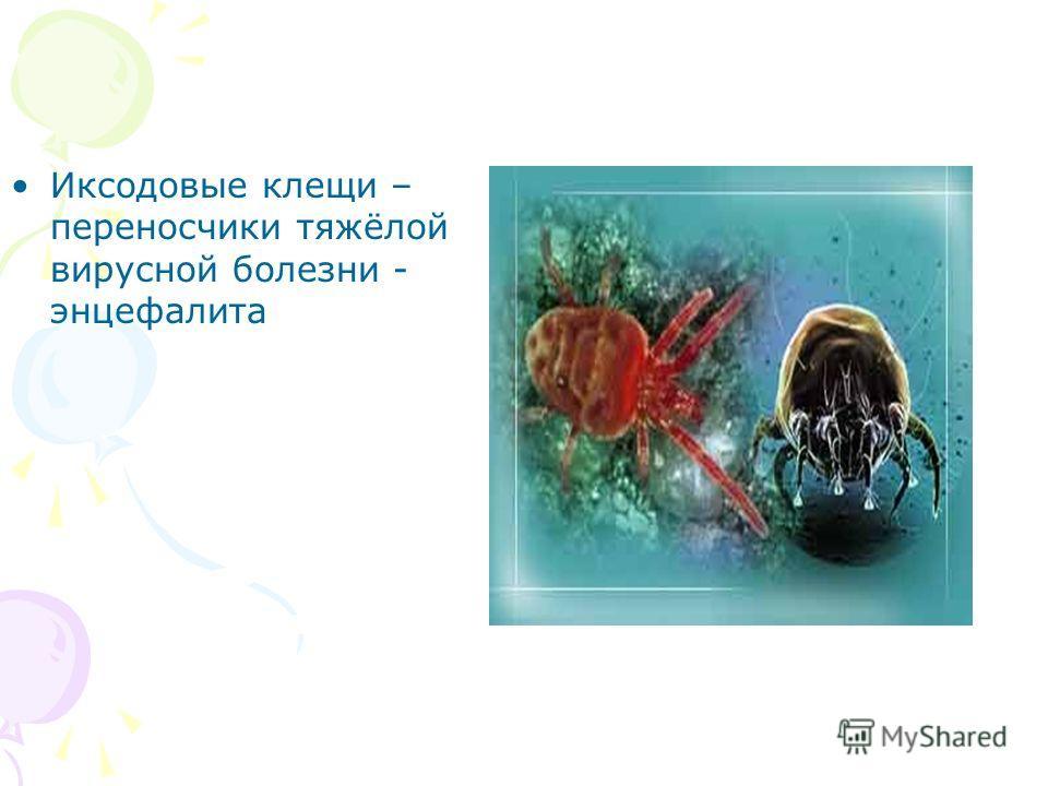 Иксодовые клещи – переносчики тяжёлой вирусной болезни - энцефалита
