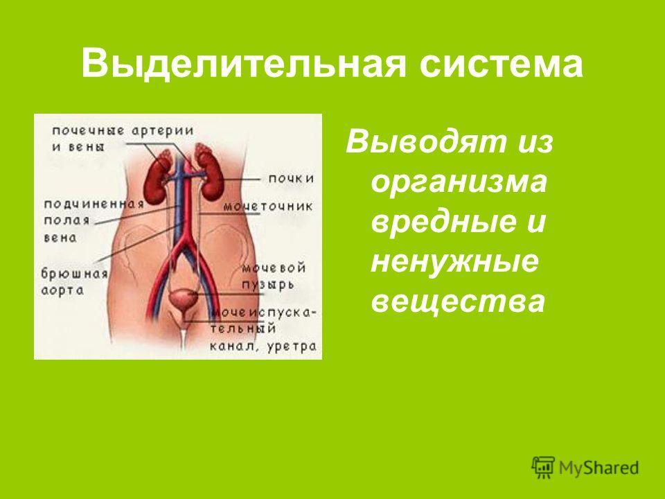 китайские препараты от паразитов отзывы