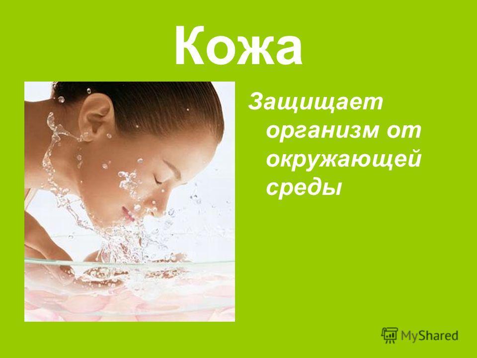 Кожа Защищает организм от окружающей среды
