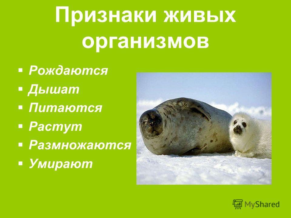 Признаки живых организмов рождаются
