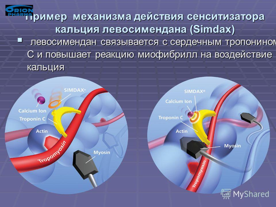 Пример механизма действия сенситизатора кальция левосимендана (Simdax) левосимендан связывается с сердечным тропонином С и повышает реакцию миофибрилл на воздействие кальция левосимендан связывается с сердечным тропонином С и повышает реакцию миофибр