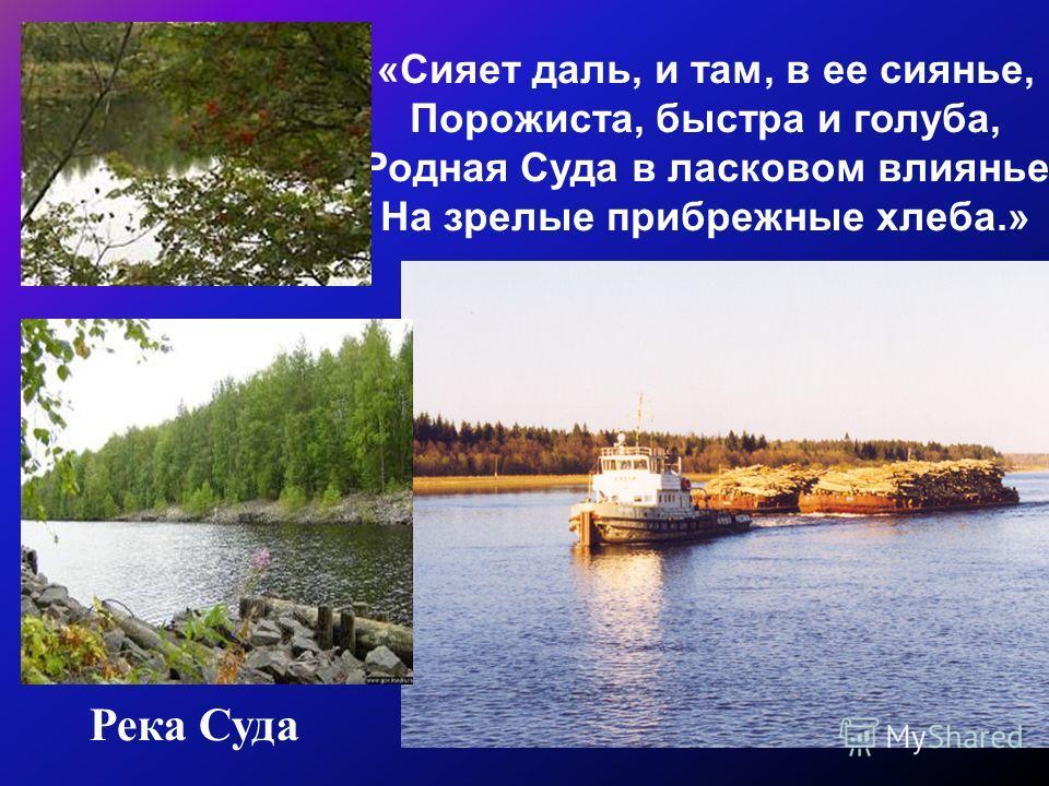 Река Суда «Сияет даль, и там, в ее сиянье, Порожиста, быстра и голуба, Родная Суда в ласковом влиянье На зрелые прибрежные хлеба.»