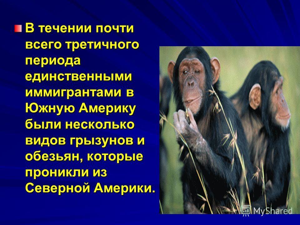 В течении почти всего третичного периода единственными иммигрантами в Южную Америку были несколько видов грызунов и обезьян, которые проникли из Северной Америки.