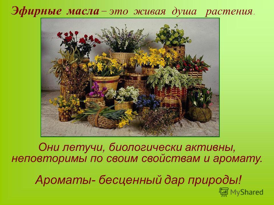 Эфирные масла – это живая душа растения. Ароматы- бесценный дар природы! Они летучи, биологически активны, неповторимы по своим свойствам и аромату.