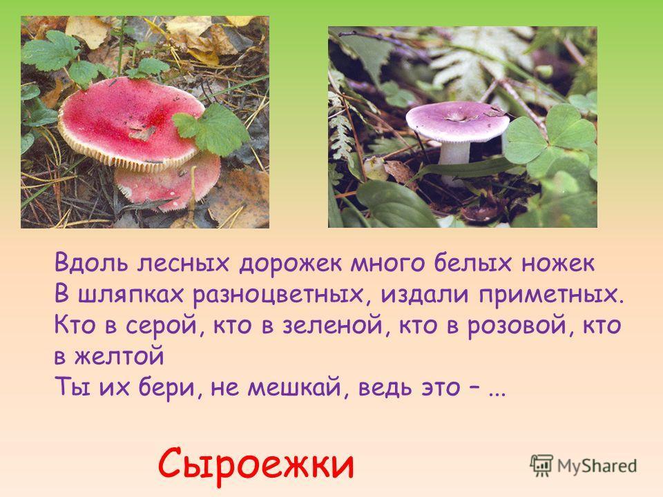 Вдоль лесных дорожек много белых ножек В шляпках разноцветных, издали приметных. Кто в серой, кто в зеленой, кто в розовой, кто в желтой Ты их бери, не мешкай, ведь это –... Сыроежки